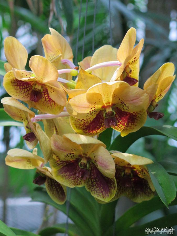 """Exposition """"Mille & une orchidées"""", Grandes Serres du Jardin des Plantes, Paris 5"""