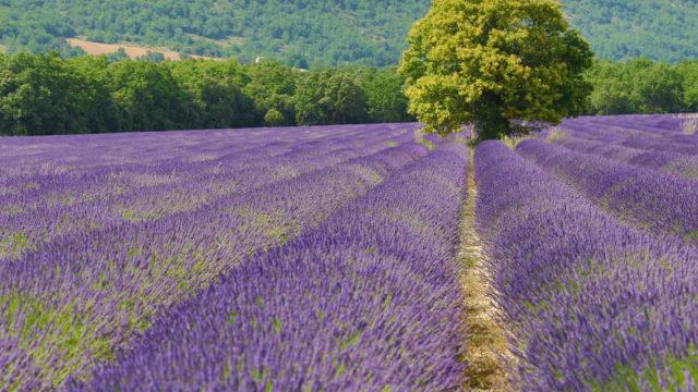 L'or bleu de Provence (1/2)