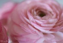 Une floraison tout en froufrous