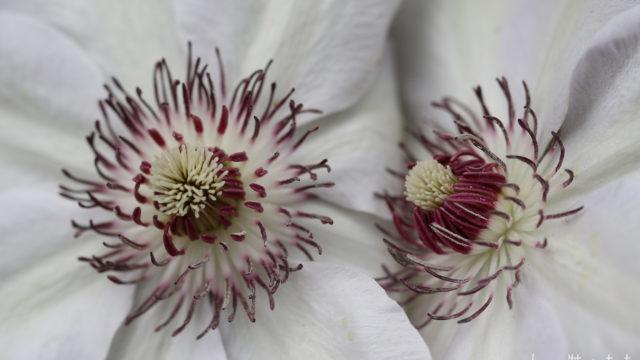 Le printemps, explosion de blancheur