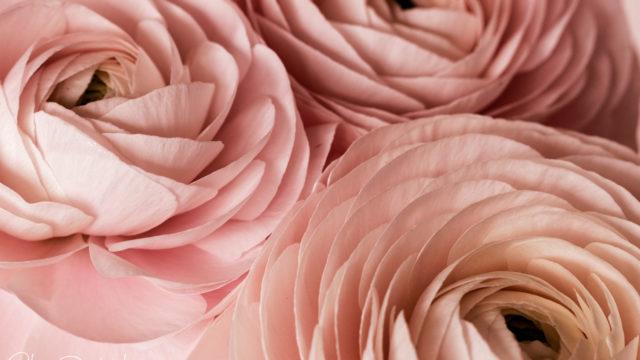 L'hiver en rose