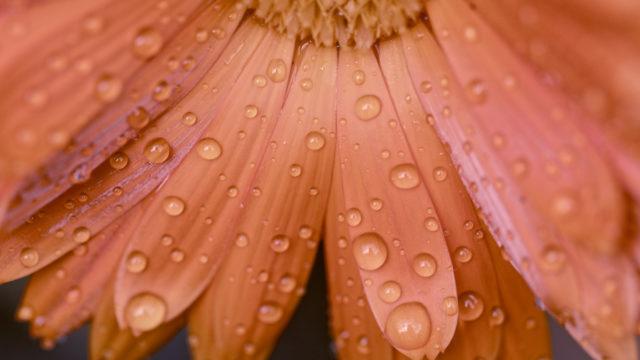Au jardin après la pluie